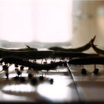 Rupsen 2000 - Photograph - 50x60 cm