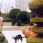 Wonderland 2 1998 - Photograph - 50x60 cm