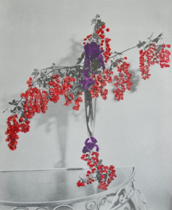 Bloemen 1 2012 – collage and photograph – 45x55cm